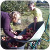 pour faire le plein de pommes